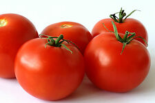A 0.2g (approx. 50) tomato seeds ALKA very productive early dwarf variety
