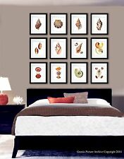 Sea Shells Coastal Decor Art Prints Set of 12 Wall Art 8x10 Beach Poster Prints