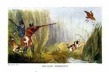 HUNTING BITTERN SHOOTING WITH DOGS, SPANIELS, COLOR AQUATIC BIRD PRINT, HUNT