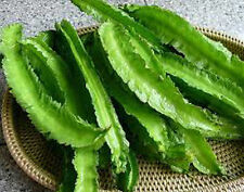 Sigarilyas Winged Bean Seeds Philippine Bureau of Plant Industries 25 Seeds
