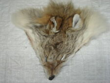 #1 Quality Tanned Coyote Faces/Fur/Crafts/Real Coyote fur, not Fake/Brush Wolf
