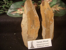 Mazon Creek Fossils Wood Braidwood, IL Inside and Outside
