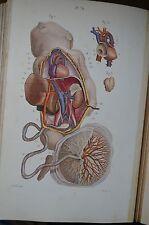 ATLAS COMPLET D'ANATOMIE DESCRIPTIVE DU CORPS HUMAIN MASSE 1888 PL. COULEUR