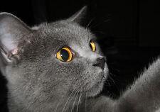 Lámina-Curioso Cat (imagen Poster Perro Gato Eagle Hawk Animal Arte)
