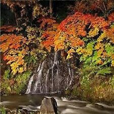 D051  SOUNDS OF NATURE CALMING & RELAXATION FOREST IN THE AUTUMN AUDIO CD