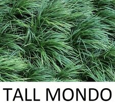 300 TALL mondo grass plants - Guaranteed quality, safe packaging, happy mondo