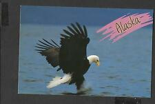 Colour Postcard Alaskan Bald Eagle catching a fish unposted
