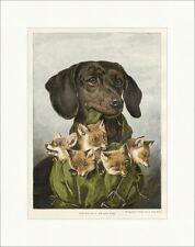 Ein Guter Fang Carl Reichert coloriert Hund Fuchsjunge Tiere Holzstich E 16602