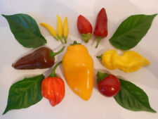 Chili Graines-Mix-Bhut Jolokia trinidad scorpion (ultra-Hot) 20 types de chacune 20 same