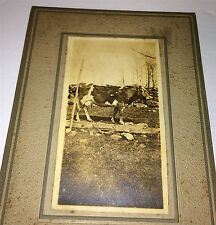 Antique Farm Outdoor Cow, Barb Wire Fence & Rock Wall Cabinet / Photo on Board!