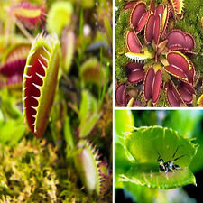 40x Rare Carnivorous Catch Cordyceps Seeds Potted Plants Office House Decoration