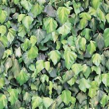 Muriva Ivy Leaf Pattern Wallpaper Realistic Photo Faux Effect Leaves Roll J43404