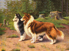 SHELTIE SHETLAND SHEEPDOG TWO DOGS LOVELY DOG GREETINGS NOTE CARD