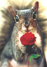 Squirrel Holding Rose Valentine's Day Card - Greeting Card by Avanti Press
