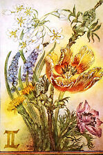 Sulamith Wulfing 1975 BUNCH of FLOWERS Vintage Botanical Art Print Matted