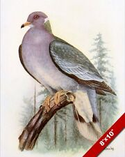 PASSENGER PIGEON BAND TAILED DOVE BIRD DRAWING PAINTING ART REAL CANVAS PRINT