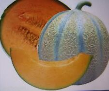 Charentais French Cantaloupe MELON seed (24) Open pollinated