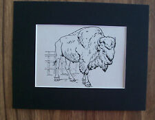 Bison Buffalo Print Winifred Austen 1935 Wild Animal Bookplate 8x10 Matted