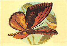 B0226 Animals Papillons Butterflies Ornithoptera croesus front/back scan