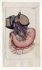 Nerven-Organe-Anatomie-Medizin - Kupferstich 1810 G. T. Wilhelm