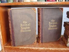 Old ANIMAL KINGDOM Book Set 1870 MAMMAL REPTILE INSECT BIRD ZOOLOGY ILLUSTRATED