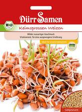 4179 Dürr BIO Keimsprossen Weizen ca.75g Milder nussartiger Geschmack Samen