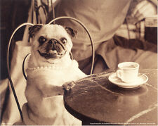 PUG CAFE MOPS HUND CARLIN DOG BLACK and WHITE PHOTO ART PRINT - by Jim Dratfield