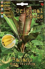 Semi/Seeds BANANA Musa Velutina