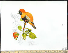 "1973 AFRICAN RED BISHOP BIRD Framable ART PRINT by Ray HARM 11""x15"""