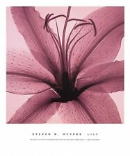 Steven Meyers Lily stargazer lilies pink x ray print 20x24 floral flower poster