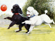POODLE CHARMING DOG GREETINGS NOTE CARD BEAUTIFUL DOGS PLAY WITH BALLOON 2 DOGS