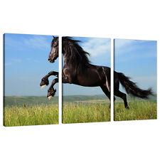 Juego De 3 tela pared arte Fotos Caballos Ponies Pony niñas habitación 3129
