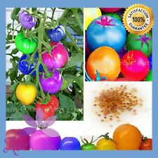 100+ Rare Rainbow Tomato Seeds Ornamental Potted Organic Vegetable & Fruit Seeds
