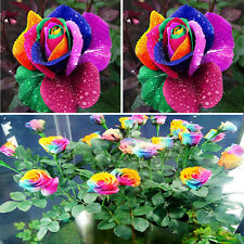 500Pcs Colorful Rainbow Rose Flower Seeds Multi Color Perennial Home Decor*