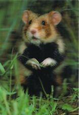 3 -D - Ansichtskarte: Feldhamster auf der Wiese - Hamster
