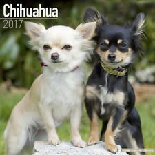 """Chihuahua 2017 Wall Calendar by Avonside (12"""" x 24"""" when opened)"""