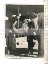 ORIGINAL PRESSEFOTO: BEAUTY and JUMBO: ELEPHANT HANDS UP THE DUSTER FOR A PUFF