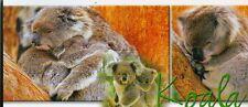XXL-Ansichtskarte: schlummernde Koalas
