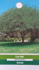 4'-5' Live Oak Tree Healthy Shade Trees Home Garden Landscape Large Plant Plants