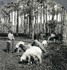 Keystone Stereoview of the former site of Memphis, EGYPT from the 1930s T600 Set
