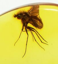 Exclusive 14k Real Gold Pendant with Fossil Big FLY in Genuine BALTIC AMBER