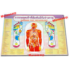POSTER SKETCH CHART OF THE FOOT REFLEXIVE ZONES BY THAI FOOT MASSAGE (SET NO.02)