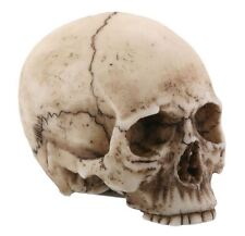 Small Human Skull Halloween Miniature Figurine 1.75 in