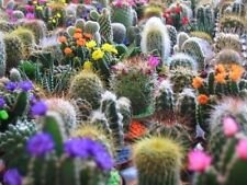 CACTUS MIX 'FINEST MIXED' Succulent Flower 20 Seeds