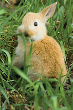 Timothy Hay Seeds -Best for Bunnies, Chinchillas, and Guinea Pig - 3,000+ Seeds