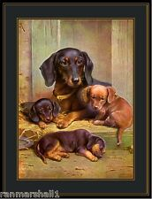 Vintage English Print Dachshund Dog Puppy Puppies Art Vintage Poster Picture