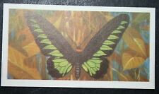 Rajah Brooke's Birdwing    Tropical Butterfly  Colour Card  VGC