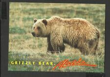 Alaska Joe Colour Postcard The Humped back Grizzly Bear Alaska unposted