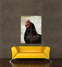 Poster impression photo géant composition FERME POULE POULET OISEAU MARRON pamp121