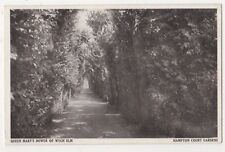 Hampton Court Palace, Queen Mary's Bower of Wych Elm Postcard, B607